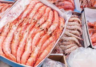 Shrimp-thumbnail